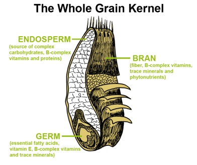 Whole Grain Kernel macronutrients and micronutrients needed by humans
